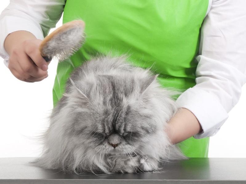 Во сколько кошка начинает хотеть кота