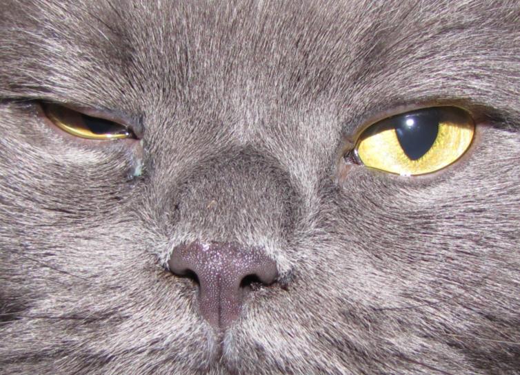 Породы кошек с фотографиями на купи кота