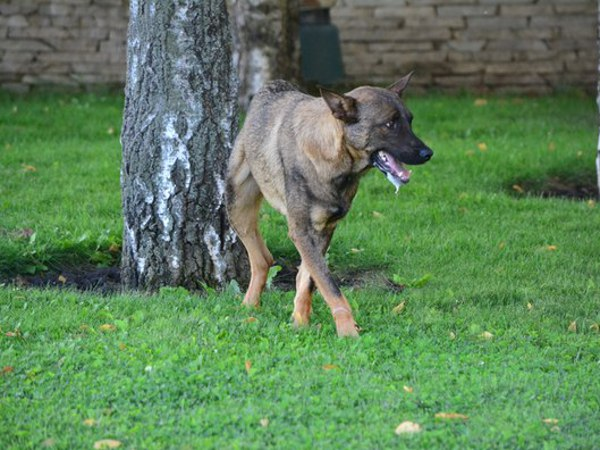 Почему идет пена изо рта у собаки