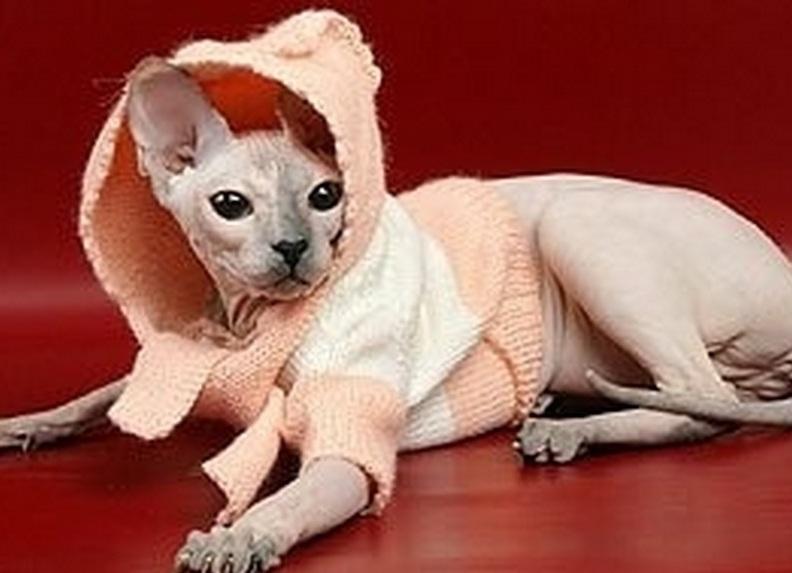Комбинезон для кошки своими руками фото 199