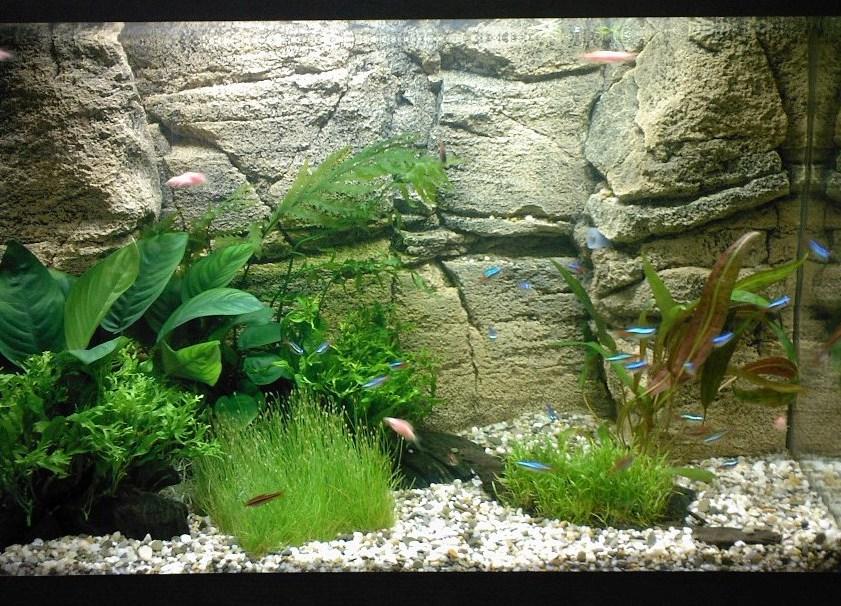 Как сделать фон задний для аквариумов
