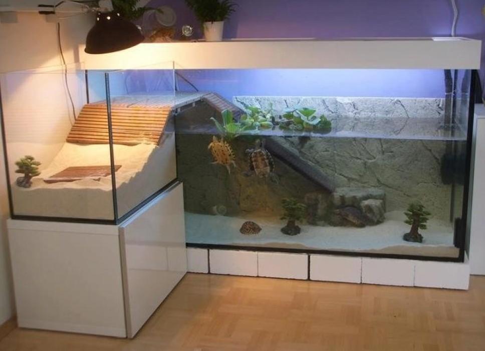 Как сделать акватеррариумом. для черепахи