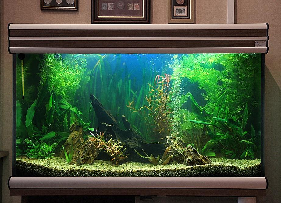Дизайн аквариума своими руками фото 589
