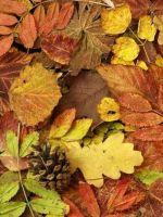 Осень в детском саду - оформление