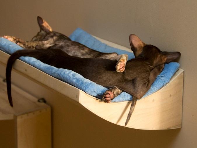 Крысы игрушки своими руками
