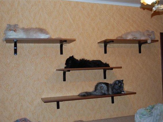 Полки на стену для котов