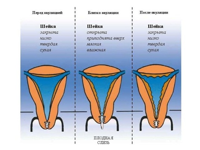 gotovnost-k-seksu-yavlyaetsya-normoy-a