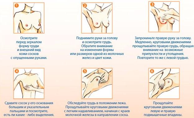 Схема самообследования груди
