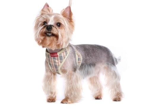 Как сделать шлейки для маленьких собак своими руками