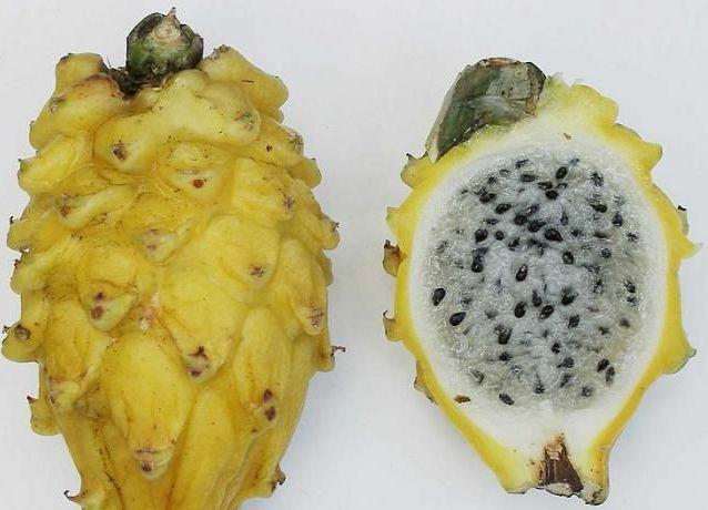 фрукт саусеп фото