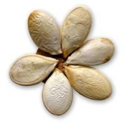 Поделки из семян из арбуза