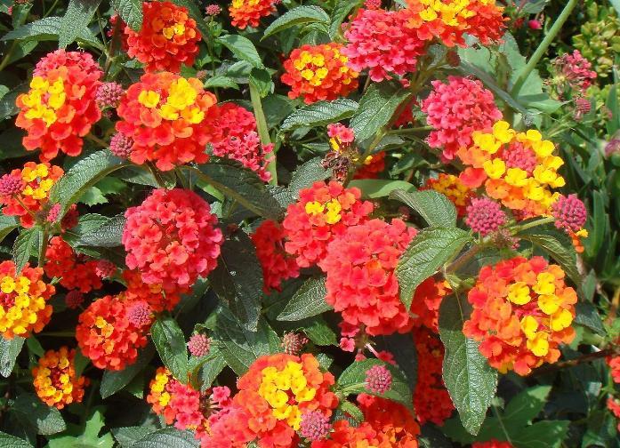 Самые красивый цветок мира