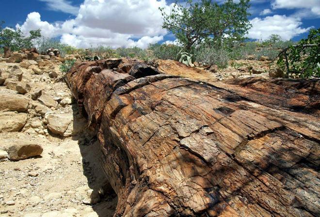 Каменный лес Намибии