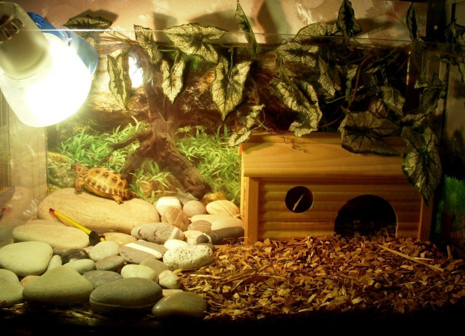 Террариум для черепахи сухопутной своими руками фото