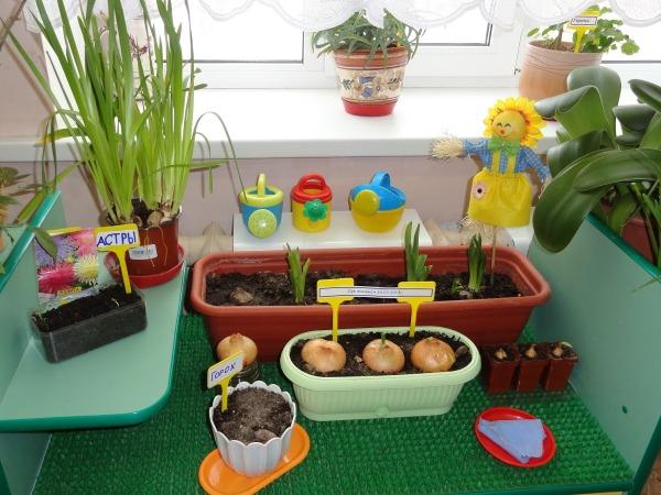 Оформление детского сада своими руками уголок природы 383