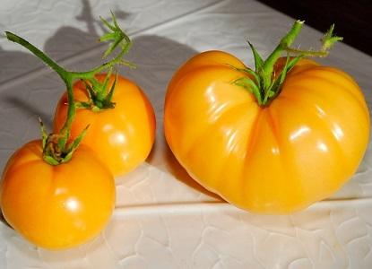 желтые помидоры сорта 1