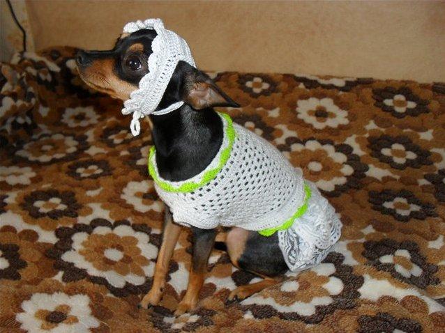одежда для собак фирмы адидас