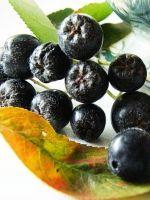 Черноплодная рябина - лечебные свойства