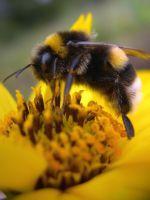 Цветочная пыльца – применение