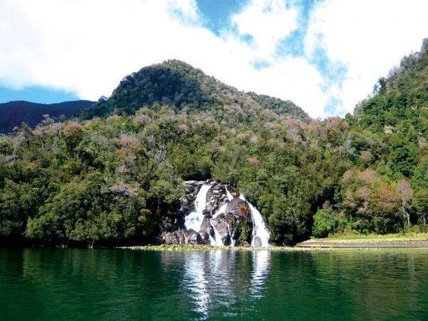 Дикие джунгли в Патагонии