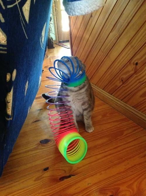 Кот с пружинкой