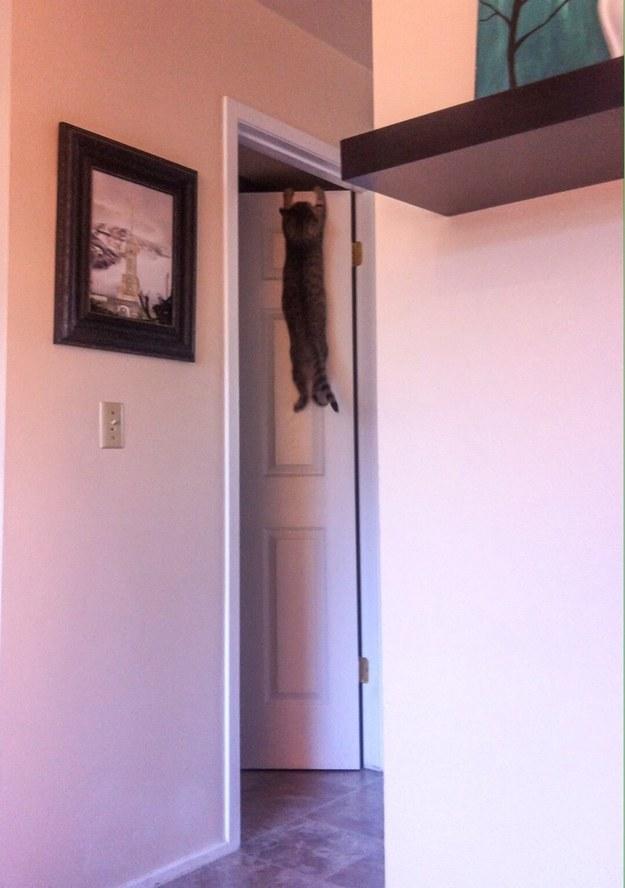 Кошка висит