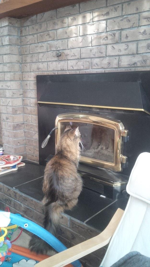 Кот с камином