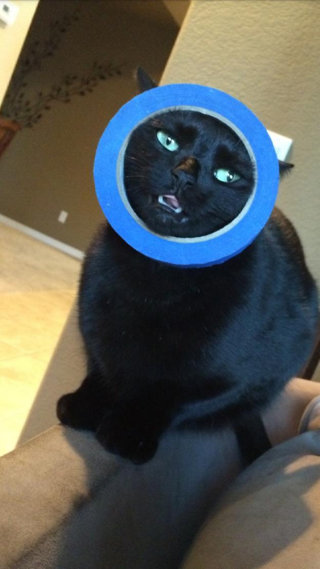 Кот с круглым предметом