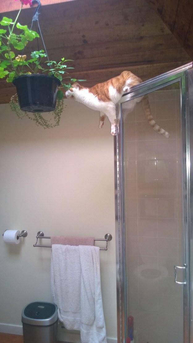 Кот не пасует перед трудностями