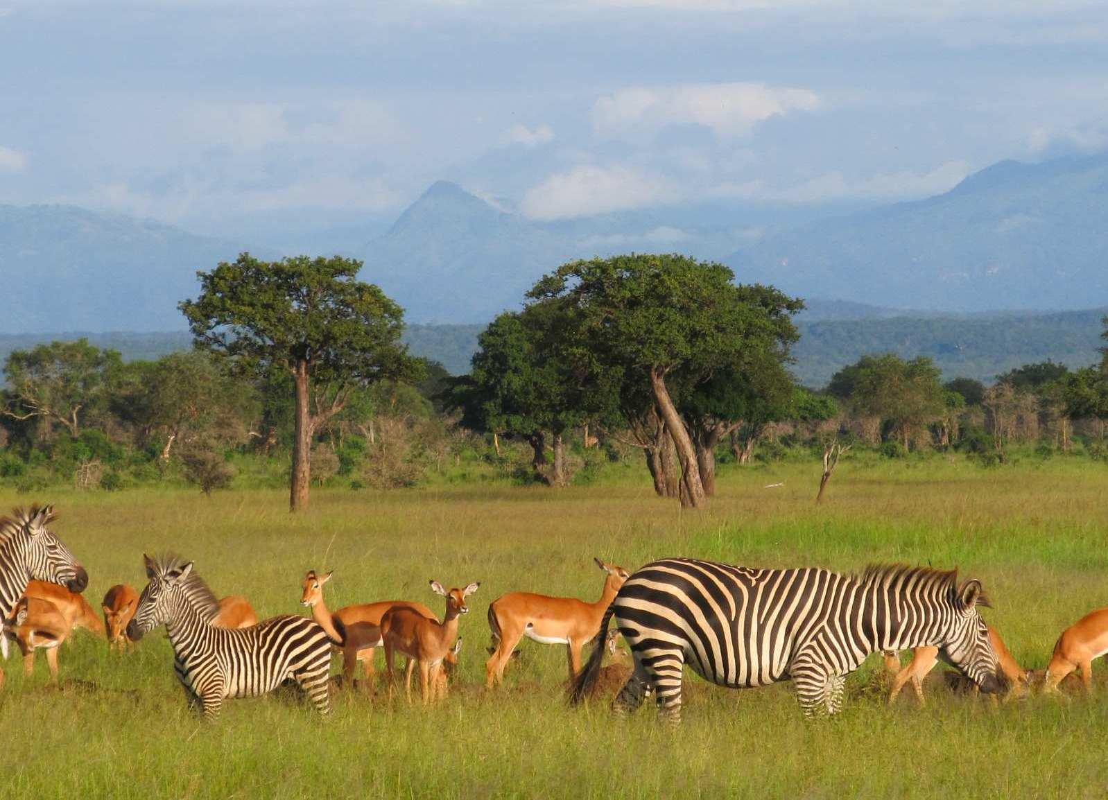 фото с сафари в танзании огненные улитки только