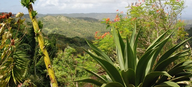Barbados Flower Forest