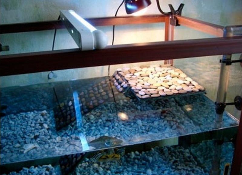 Как в аквариуме сделать островок для черепахи своими руками фото 971