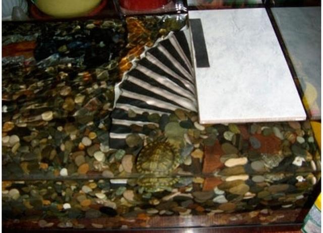 Островок для красноухой черепахи своими руками (фото) 41