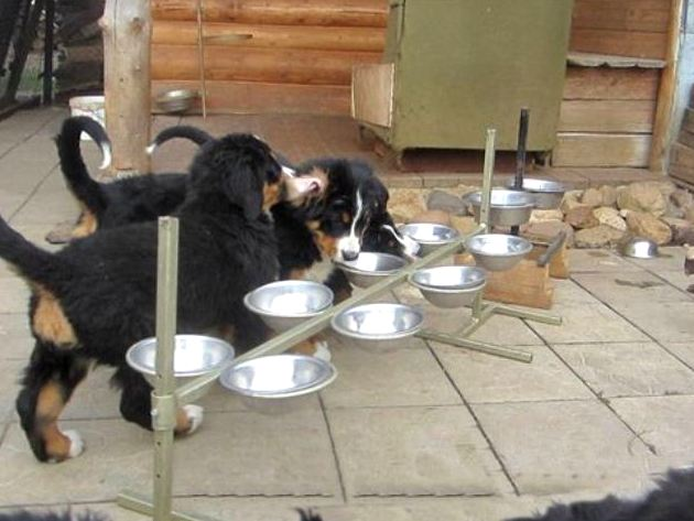 Подставка для кормления собак своими руками 316