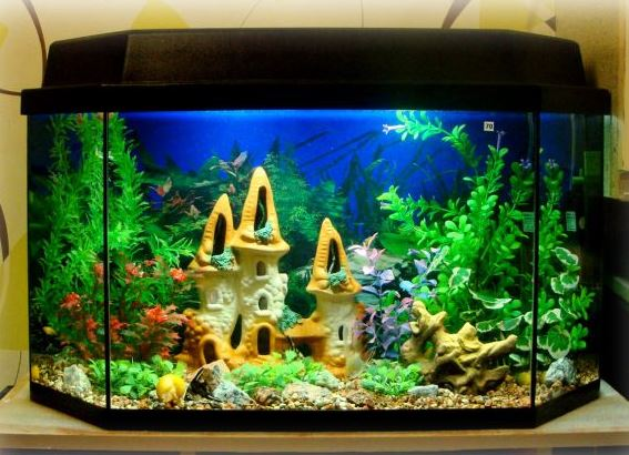 Вега декорации для аквариума купить порно фотки
