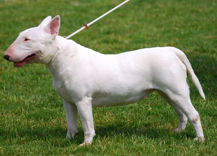 фото страшная собака