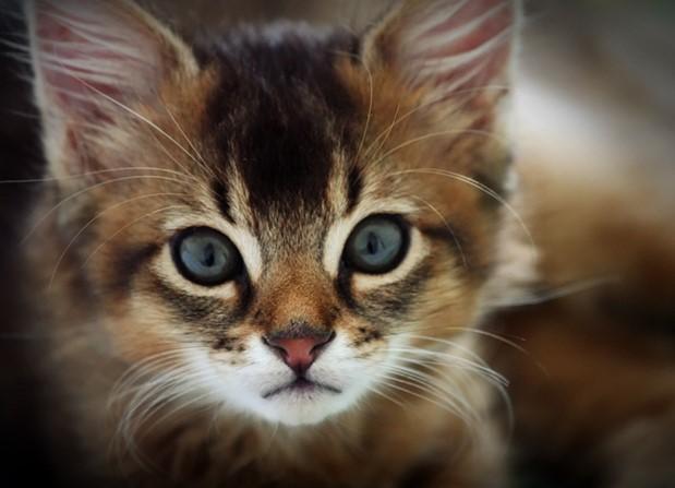 Породы кошек с фотографиями и названиями. Топ 58 пород котов || Мадагаскарская порода кошек