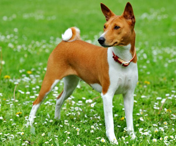 фото маленьких пород собак с названием породы
