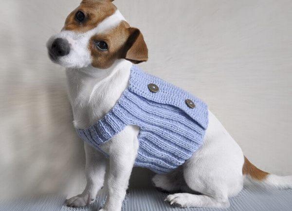 одежда для собак своими руками вязание