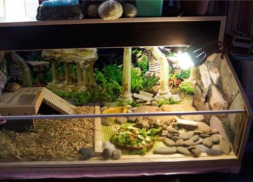 Своими руками в аквариум для черепахи фото 495