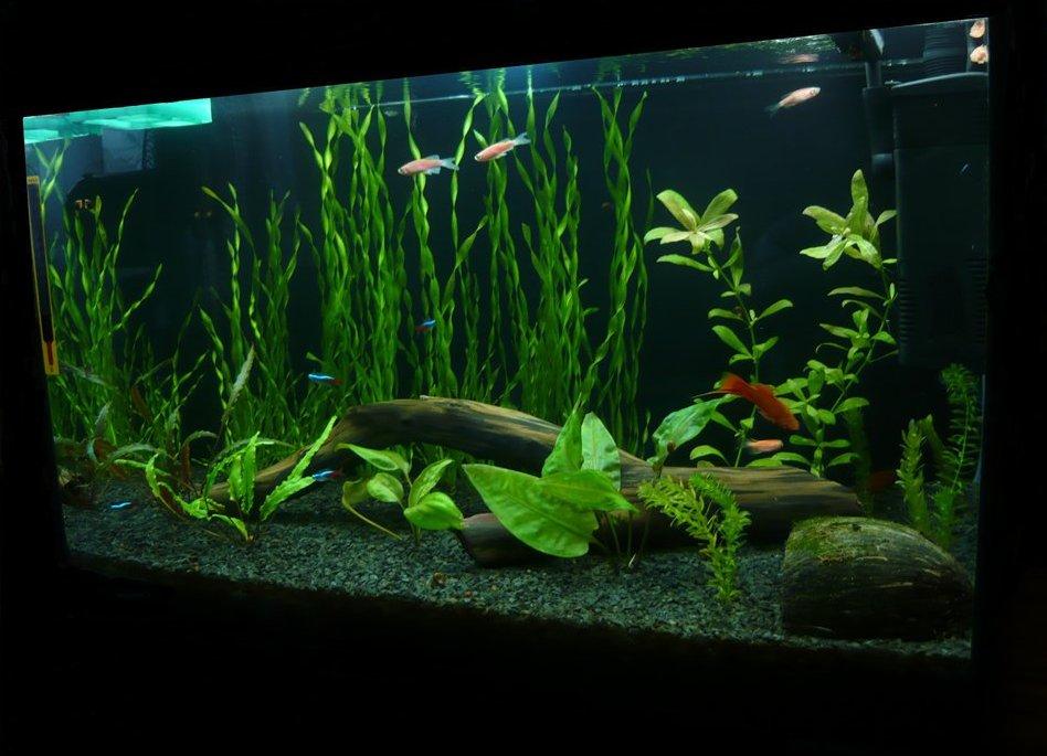 Как сделать фон для аквариума — pic 3