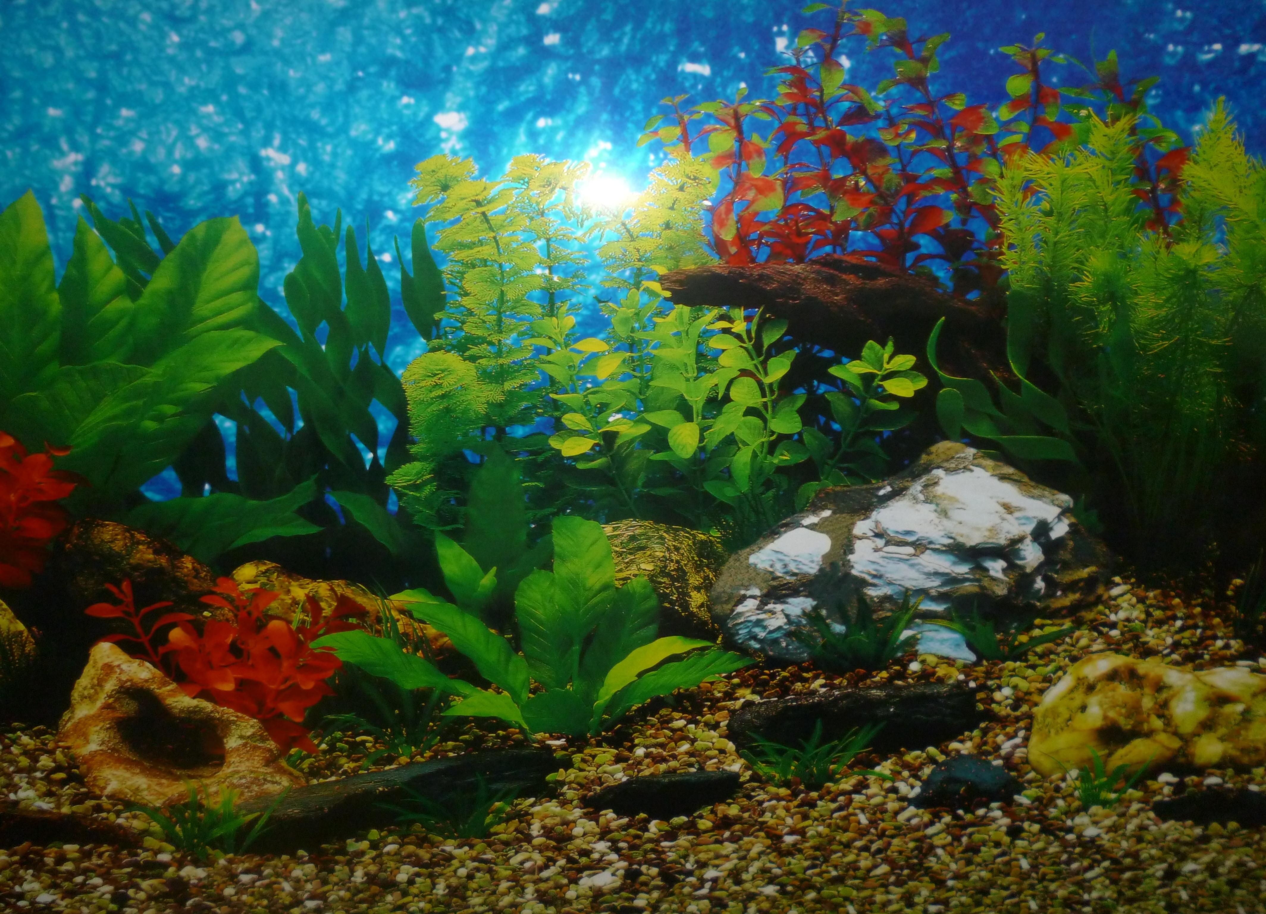 всё картинки на аквариум песок ищете прозрачные изображения