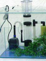Что нужно для домашнего аквариума?