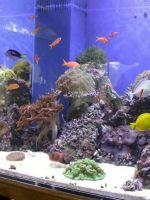 Что нужно для аквариума с рыбками?