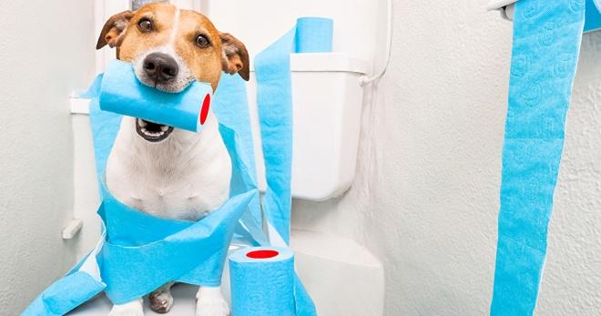 Фуразолидон щенку при поносе назначение дозировки