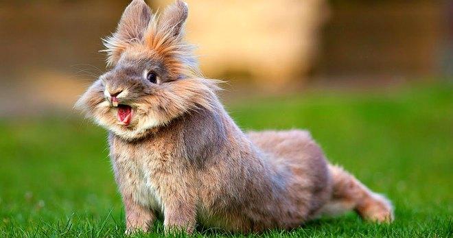 Вакцинация кроликов: какие прививки и когда делать, можно ли прививать в домашних условиях?