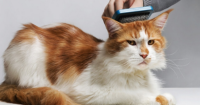 Почему у кошки на спине перхоть