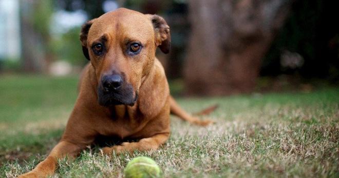 Как вылечить демодекоз у собак