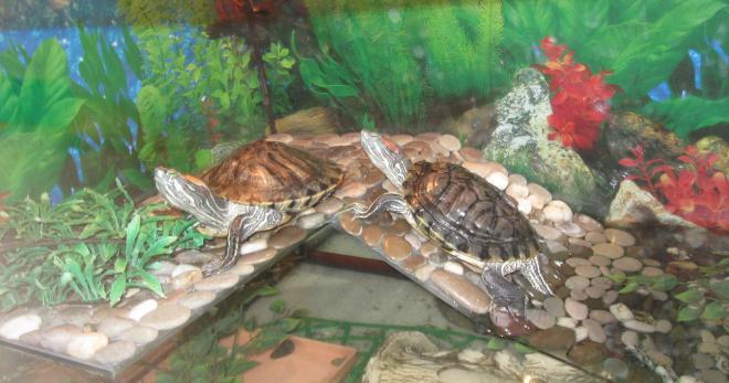 Уход за морской черепахой