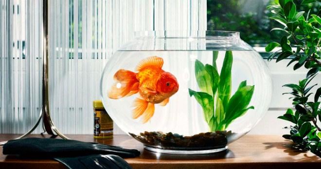 Грунт для аквариума своими руками: фото, видео, рецепты